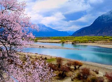 Nyingchi peach trees are in full bloom in March and allure numerous tourists.